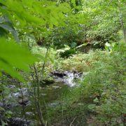 Bee Creek through the leaves