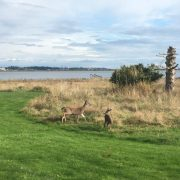 Two deer playing in the grass
