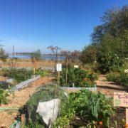 Community Garden at Pacific Landing